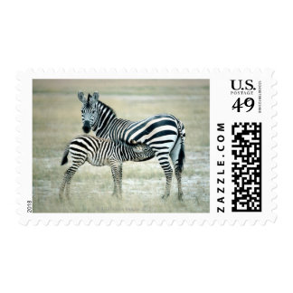 24114480 POSTAGE STAMPS