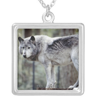 24114488 SILVER PLATED NECKLACE