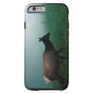 24121885 FUNDA PARA iPhone 6 TOUGH