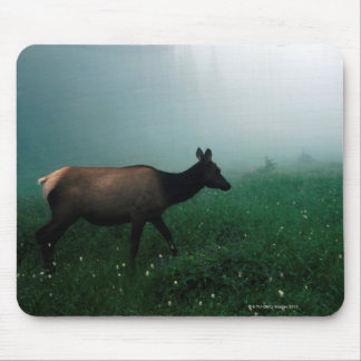24121885 MOUSE PADS