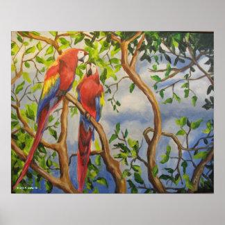#24 Scarlet Macaws Print