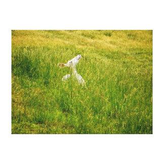 "24"" x 18"" Albino Whitetail Deer Canvas Print"