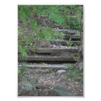 "24"" x 20"", Nature's Steps Art Photo"