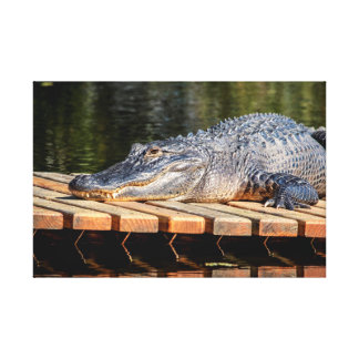 24x16 Alligator at Homosassa Springs Wildlife Park Canvas Print