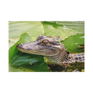 24x16 Young Alligator Canvas Print