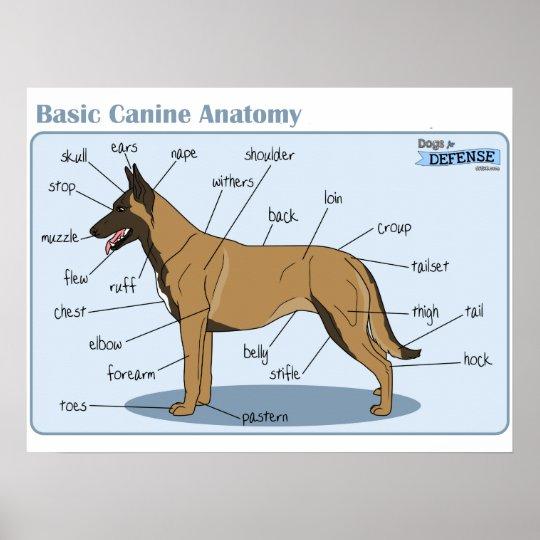 24x18 Canine Anatomy Poster Zazzle