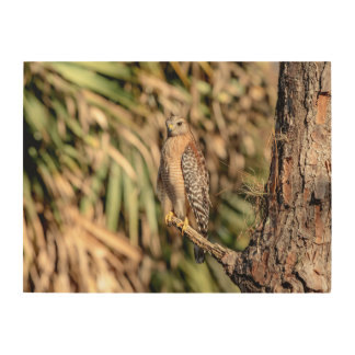 24x18 Red Shouldered Hawk in a tree Wood Wall Art