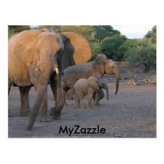 2554kjpg.jpg, MyZazzle Postcard