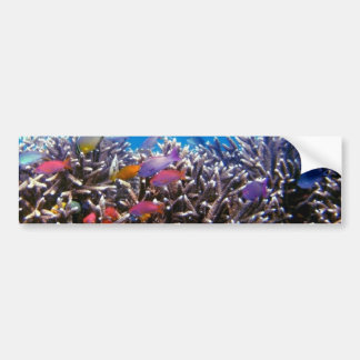 256563 TROPICAL COLORFUL FISH SEALIFE OCEAN CORAL BUMPER STICKER