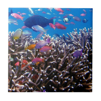 256563 TROPICAL COLORFUL FISH SEALIFE OCEAN CORAL SMALL SQUARE TILE