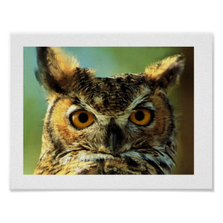 27.94x21.59cm, Paper poster (chechmate) owl