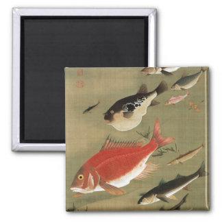 28. 群魚図, 若冲 Various Fishes, Jakuchū, Japan Art 2 Inch Square Magnet