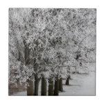 2-26-13 imágenes al azar 064.JPG del invierno Teja Ceramica