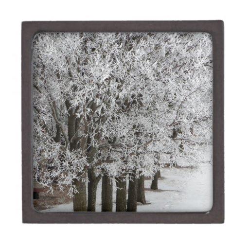 2-26-13 imágenes al azar 064.JPG del invierno Caja De Recuerdo De Calidad