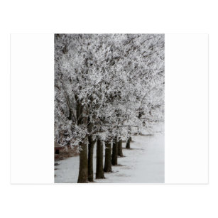 2-26-13 random winter pics 064.JPG Postcard