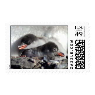 2 Baby Penguins Postage Stamps