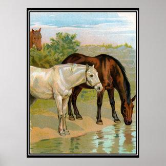 2 Beautiful Horses Drinking Vintage Print