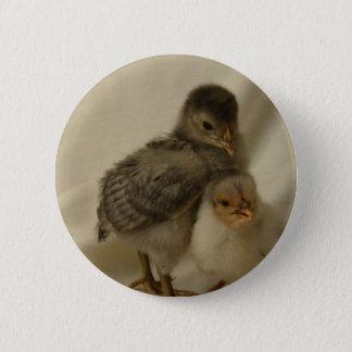 2 Blue/Gray Chicks Button
