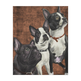 2 Boston Terriers and French Bulldog Canvas Print