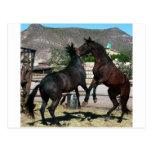 2 caballos en amor, Almería España. Foto Colette Tarjetas Postales