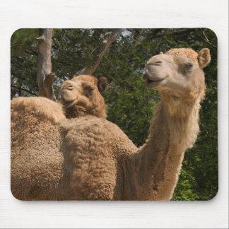 2 Camels Mousepad
