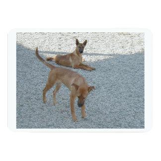 2 Carolina_Dogs.png 5x7 Paper Invitation Card