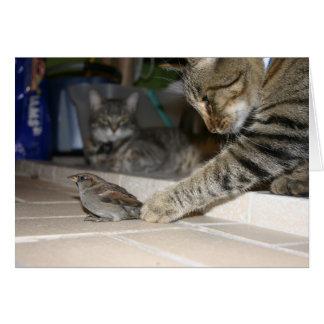 2 cats and a Bird Card
