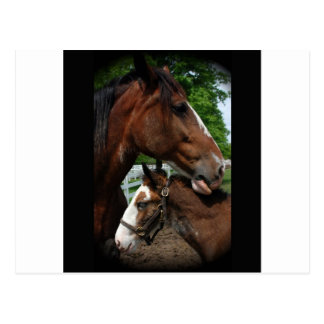 2 clydesdale heads black postcard