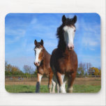 2 Clydesdales mousepad