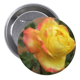 2 color de rosa amarillos y anaranjados imponentes pin
