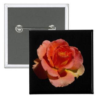 2 color de rosa anaranjados pin