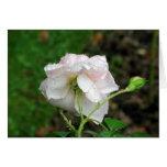 2 color de rosa antiguos tarjetón