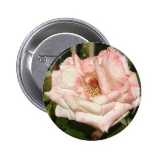 2 color de rosa blancos y rosados abigarrados viej pins