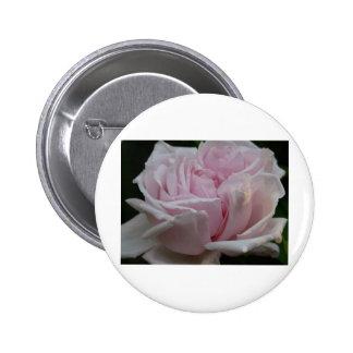 2 color de rosa, rosas claros pins