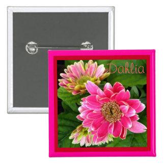 2 dalias de color rosa oscuro pin