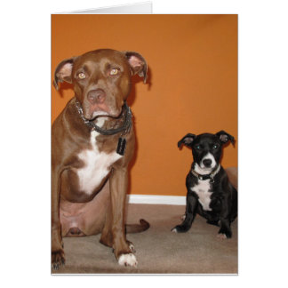 2 Dogs Card