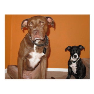 2 Dogs Postcard