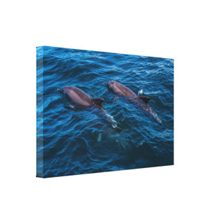 2 Dolphins off Surfers Paradise Canvas Print