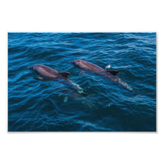 2 Dolphins off Surfers Paradise Photo Print