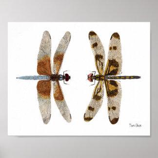 2 Dragonflies Art Poster