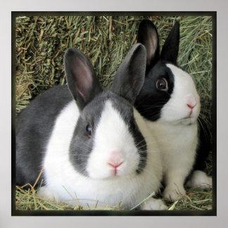 2 Dutch Rabbits poster