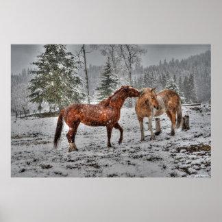 2 Friendly Ranch Horses, Dun, Palomino Paint Photo Poster