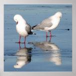 2 gaviotas en una playa póster