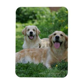 2 Golden Retrievers Laying in Grass Magnet