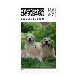 2 Golden Retrievers Laying in Grass Postage