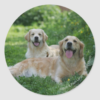 2 Golden Retrievers Laying in Grass Stickers