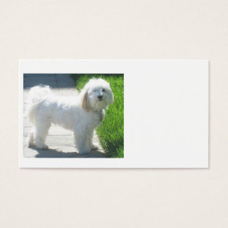 2 Havanese full.png Business Card