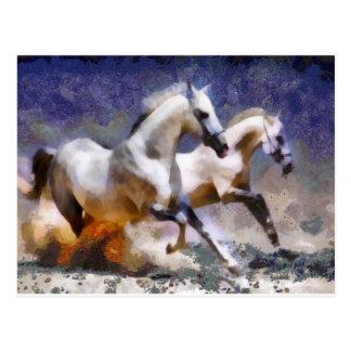 2 horses beach gallop postcard