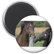 2 Horses Chewing a Fence Post Magnet