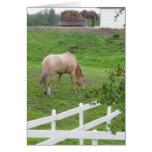 2 Horses Greeting Card